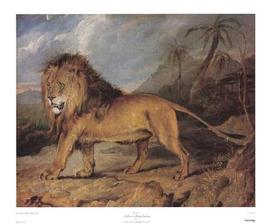 Lion in a Rocky Landscape