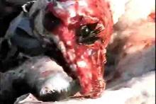 dog skinned