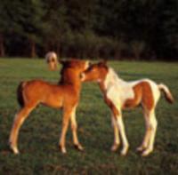 Spoiled Acres Nursemare Foals